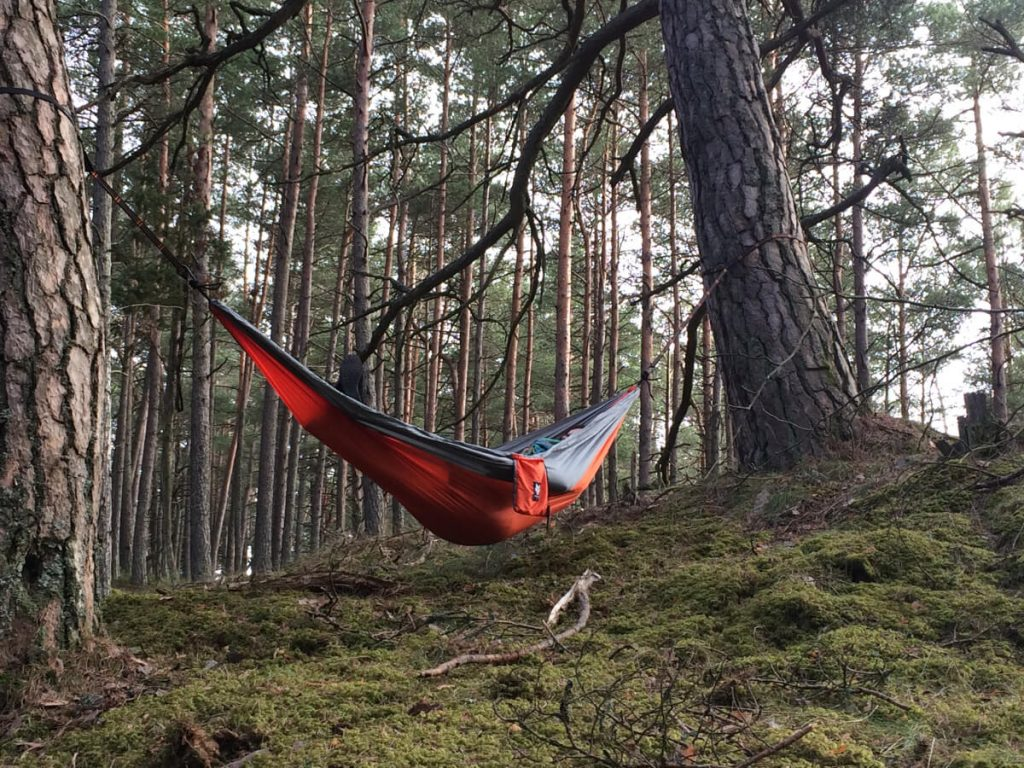 Medium image of camping hammock in the forest