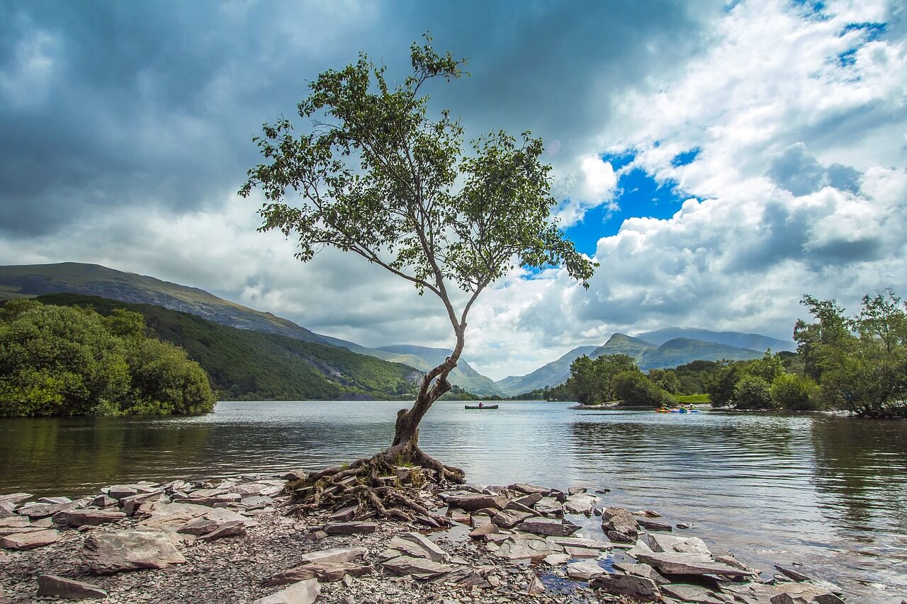 Snowdonia lake with tree