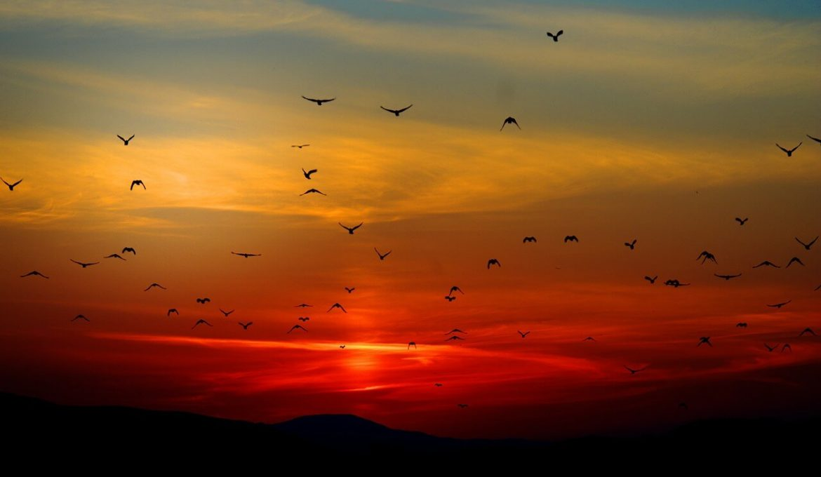 sunset and flying birds