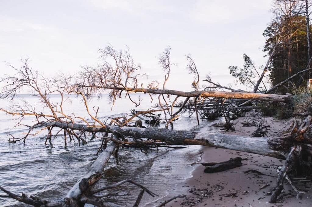 A Micro-Trip on the Coastline of Latvia