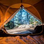 camping tent near green trees - view from inside of tent