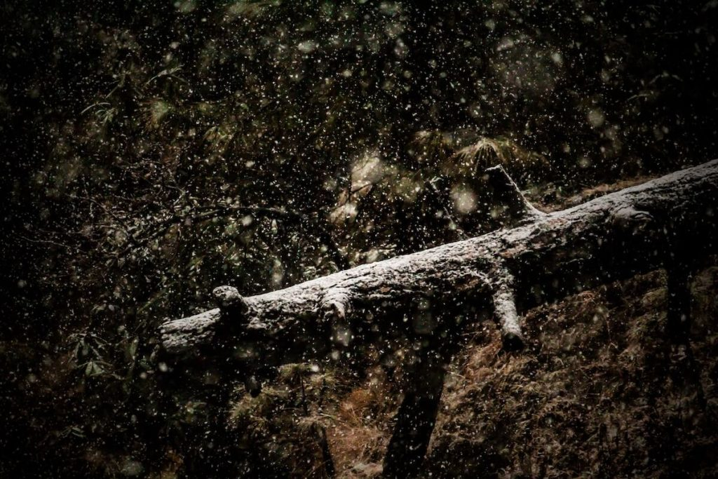 fallen three with snow