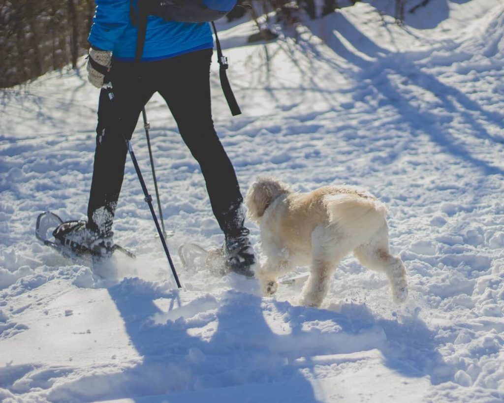 man hiking with dog in winter