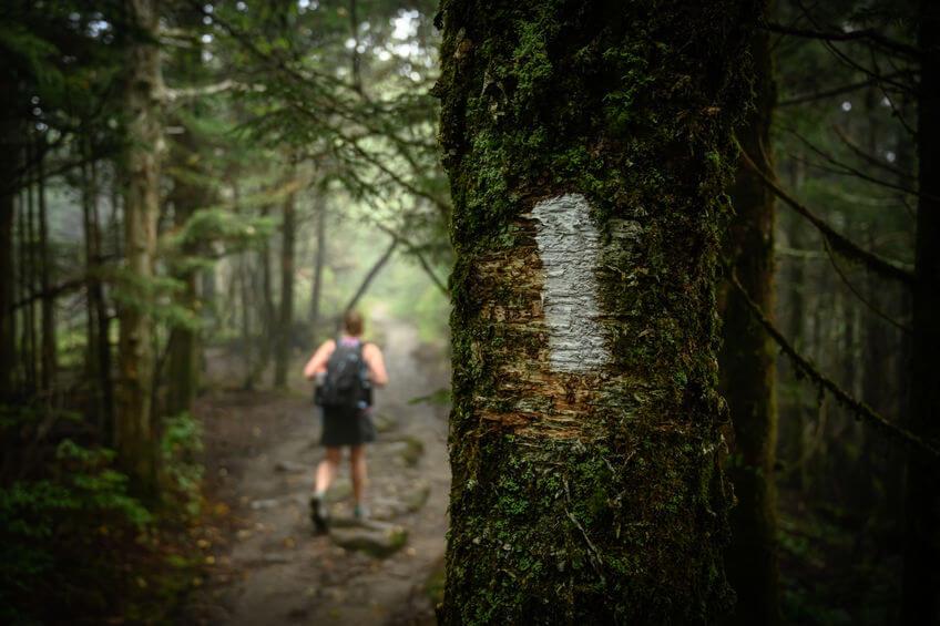 hiker passes Appalachian Trail blaze in forest